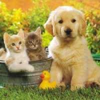 Фото декор за торта - Кученце и котенца От Секрето 13 ЕООД