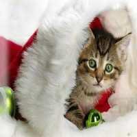 Фото декор за торта - Коледно котенце От Секрето 13 ЕООД